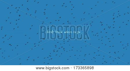 Huge amount of birds flying in the sky - vector birds silhouettes isolated
