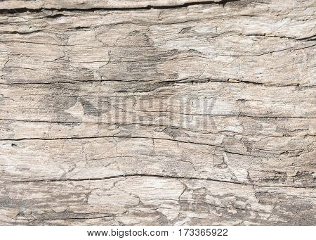 Texture old wood background wood oak style