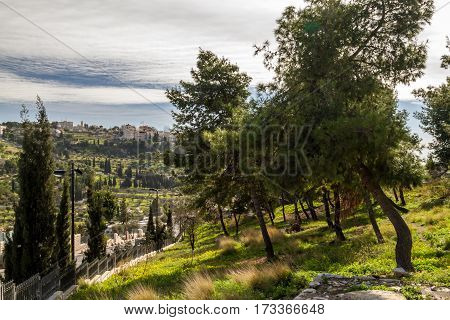 The coniferous trees on a hillside the wooded hillside in Jerusalem landscape of Israel
