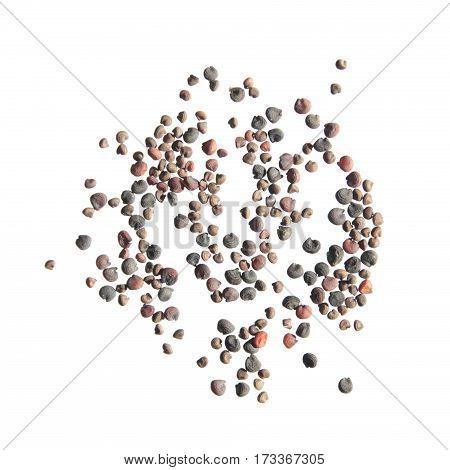 Showy baby's-breath (Gypsophila elegans) seeds on white background