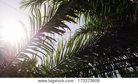 Silhouette palm tree against with sun light flare.