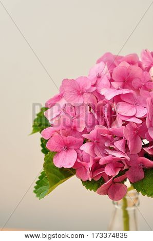Hydrangeas displayed in a bottle isolated on a white background