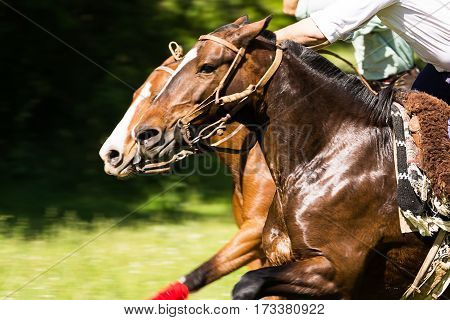 A competing with their horses jockey in the nature