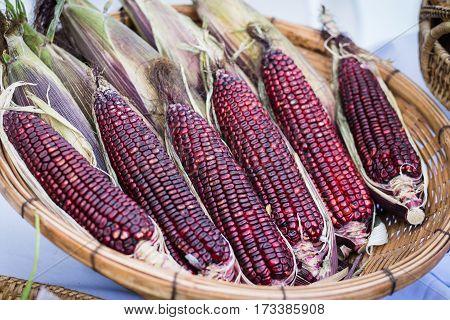 Purple waxy corn in basket on white background.