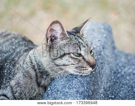 Portrait of grey cat sleeping, Sweet dream cat with place your text