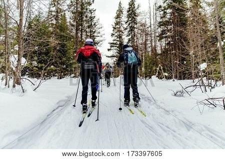 group of skiers in pine forest in winter classic style