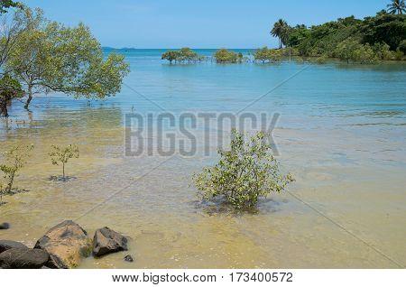 coral sea and shoreline at port douglas in queensland australia