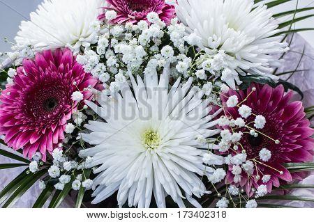 Bunch Of Fresh Pink Gerbera Chamomile And Big White Chrysanthemum Flower