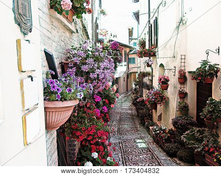 Windows balcony and flower alleys in Spello - Province of Perugia Italy . Artistic representation