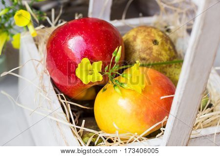 Colorful fresh red yellow apples pears in vintage wood box on straw yellow flower kitchen table outdoor in garden summer spring time top view close up