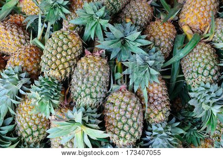 A bright background of fresh juicy pineapples
