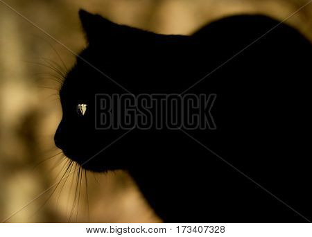 Black cat with mysterious eyes sits and looks forward