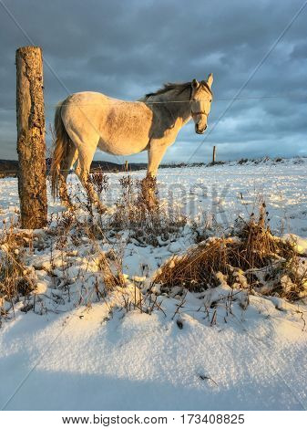 Horse in winter on fresh snow