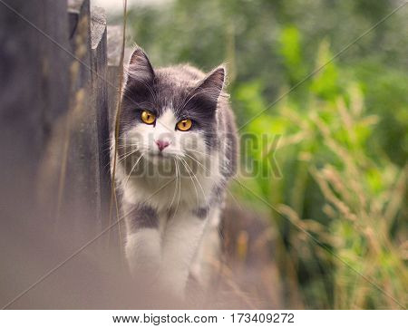 Cat returned home from a walk on the fence