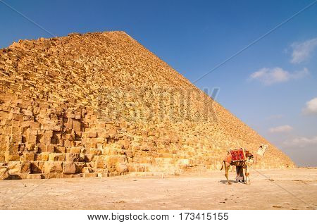 Landscape view of Egypt pyramid in Gisa with camel near Cairo Egypt