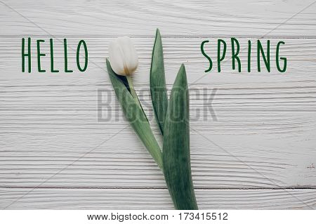 Hello Spring Text Fresh Sign. Stylish White Tulip On Rustic Wooden Table Background Top View. Hello