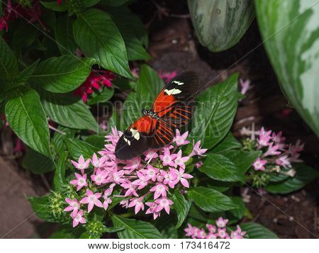 Orange and Black Butterfly on some Flowers in a Butterfly Museum Fort Myers Florida