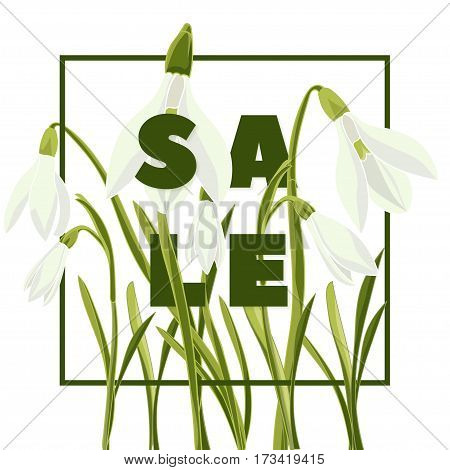 Modern typography with text Sale. Hand drown bouquet of snowdrops. Botanical vector illustration. Colorful flowers graphic design Good idea for offer prints web banner