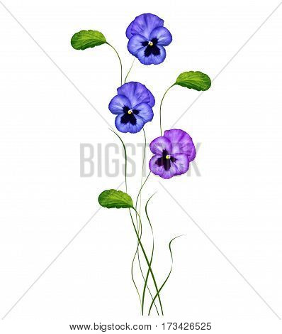 Pansy Violet with Green Leaves on white background