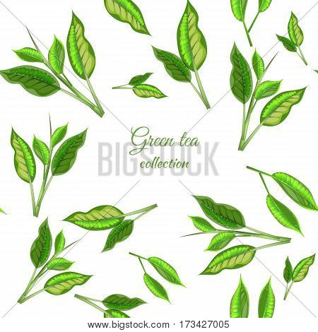 Seamless Vector Green Tea Banner With Tea Leaves On White Backgroud. Design For Packaging, Tea Shop,