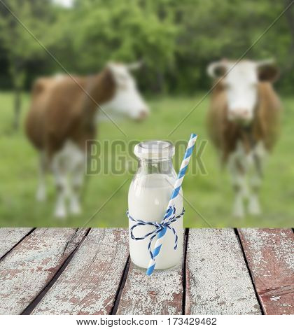 Milk bottle with striped straw. Cow's milk overlooking a meadow with grazing cows