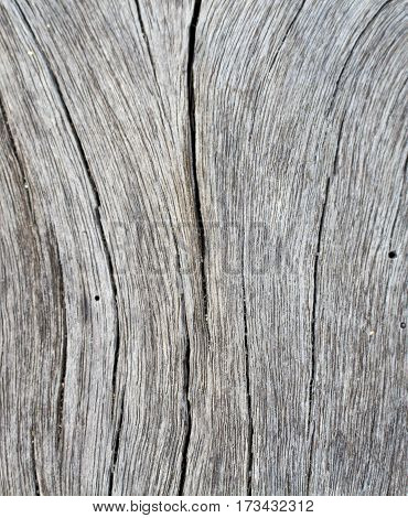 Vertical wood texture close up photo. White and grey wood background. White old tree near the sea. Curves and lines on rustic timber. Rough timber texture. Sea wood backdrop. Grey old tree with cracks