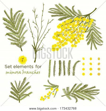 Set of hand-drawn elements for branches of mimosa. A good idea for your design poster greeting card web banner. Vector illustration