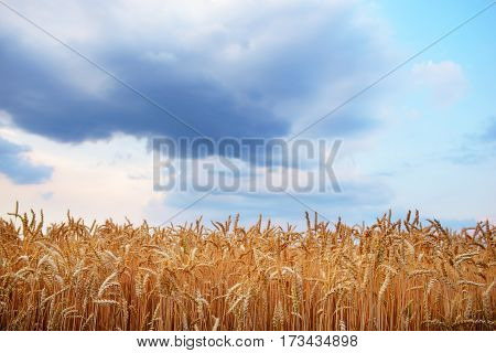 Empty Countryside Road Through Fields With Wheat