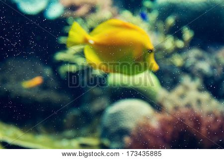 Beautiful Fish Red Sea Coral Animal. Horizontal with Copy Space. Unfocused background.