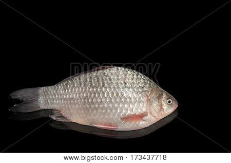 Raw freshwater fish on a black background, with reflection. Place for text.