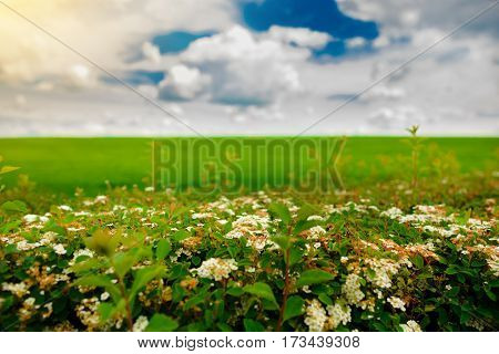 Field With Colors And Blue Sky With Clouds