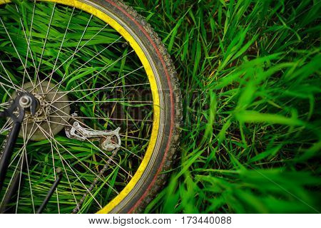 Bicycle Wheel On Green Grass