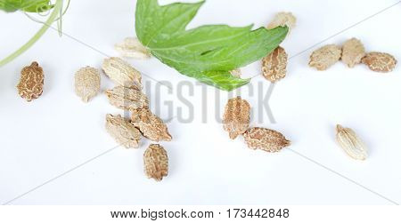 Seeds of plants Momordica on a white table