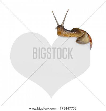 Snail on heart isolated