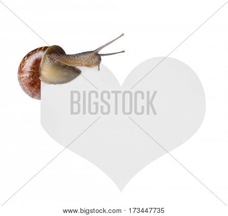 Snail on heart isolated white