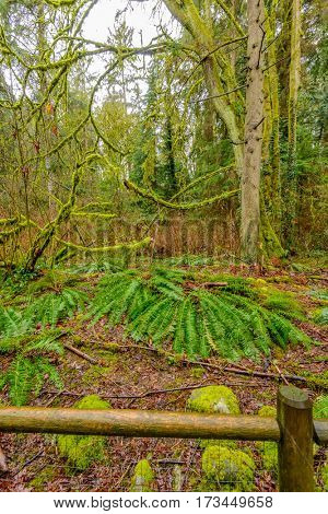 Beautiful rain forest park in Vancouver, Canada. Inter River Park. North Vancouver. British Columbia.