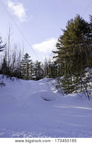 Vertical of a small of fresh snow rising up to a background of green fir trees with a small animal hole midway up at Pabineau Falls near Bathurst, New Brunswick on a bright sunny day with blue skies and clouds in February.
