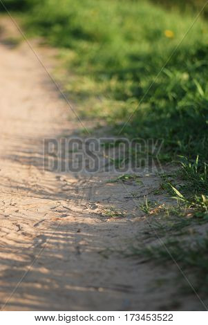 Sand path going though the spring meadow full of fresh green grass.