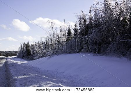 Winter snow scene with the sun on a row fir trees along the side of the highway to Miramichi, New Brunswick covered in thick glittering ice and snow from a recent ice storm. Shot on a chilly bright blue sky sunny day in February.