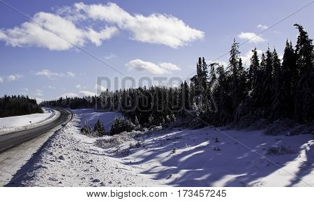 Winter snow scene small bare branches protrude on a snow covered patch along the highway to Miramichi, New Brunswick covered in thick glittering ice and snow from a recent ice storm with rows of fir trees in the background. Shot on a chilly bright