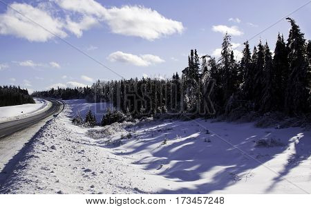 Winter snow scene small bare branches protrude on a snow covered patch along the highway to Miramichi, New Brunswick, covered in thick glittering ice and snow from a recent ice storm with rows of fir trees in the background. Shot on a chilly bright, blue