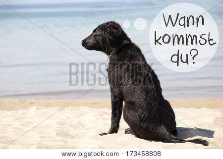 Speech Balloon With German Text Wann Kommst Du Means When Are You Coming. Flat Coated Retriever Dog At Sandy Beach. Ocean And Water In The Background