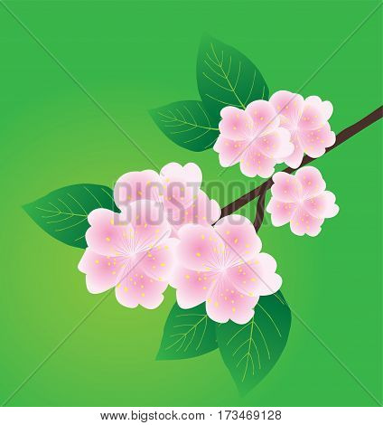 vector illustration of an apple blossom branch on green background