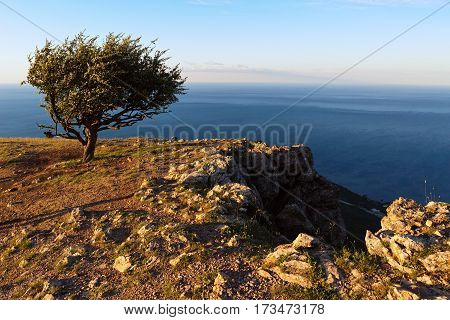 Lonely tree on a background of the Black Sea at sunrise on top of the mountain Ilyas Kaya.