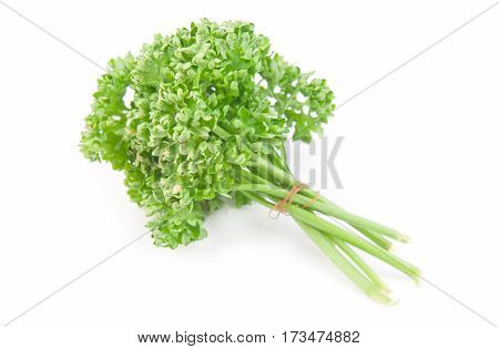 bunch of parsley is isolated on white background