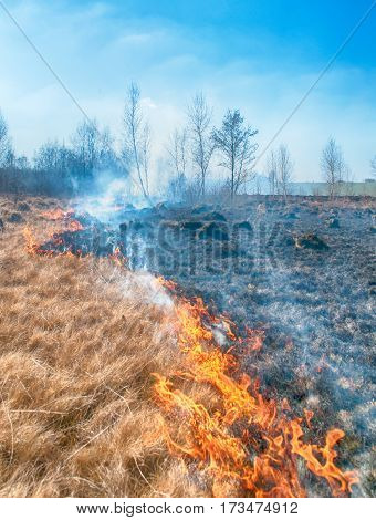 fire on spring field. A close up