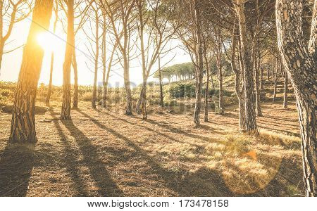 Trees and shadows in woods at sunset by