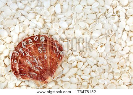 Scallop shell and seashell background with a variety of white shells forming a background.