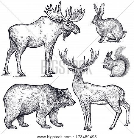 Forest animals set. Hand drawing sketch black ink isolated on white background. Vector art illustration. Vintage engraving style. Nature objects moose deer bear rabbit squirrel. Wildlife mammals.