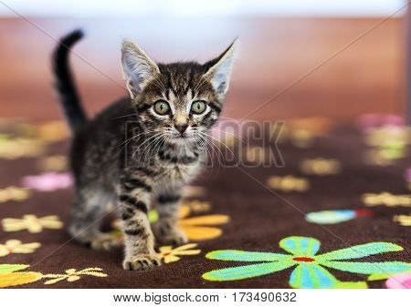 Gray striped frightened kitten sitting on a bed